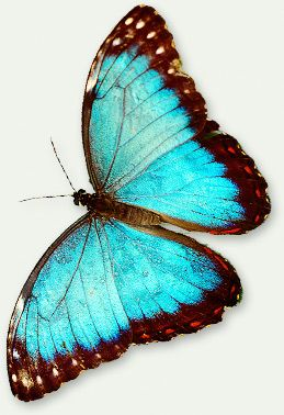 Butterflies | Causes of Color