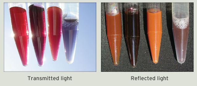 Dispersions of discrete gold nanoparticles in transparent media provide a  fascinating range of colors bde3ac538