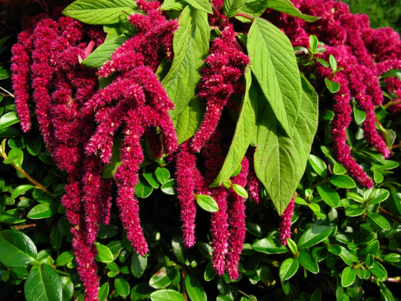 different flower structures plants causes of color